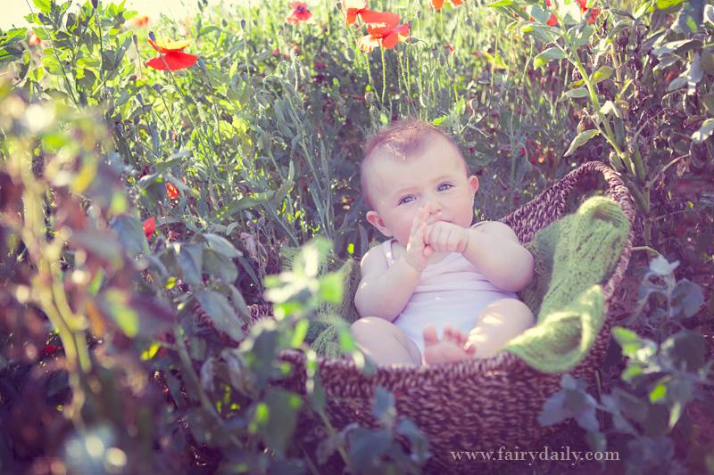 Fairy Daily, Elena Tihonovs, bebe fille dans le champ des coquelicots à toulouse