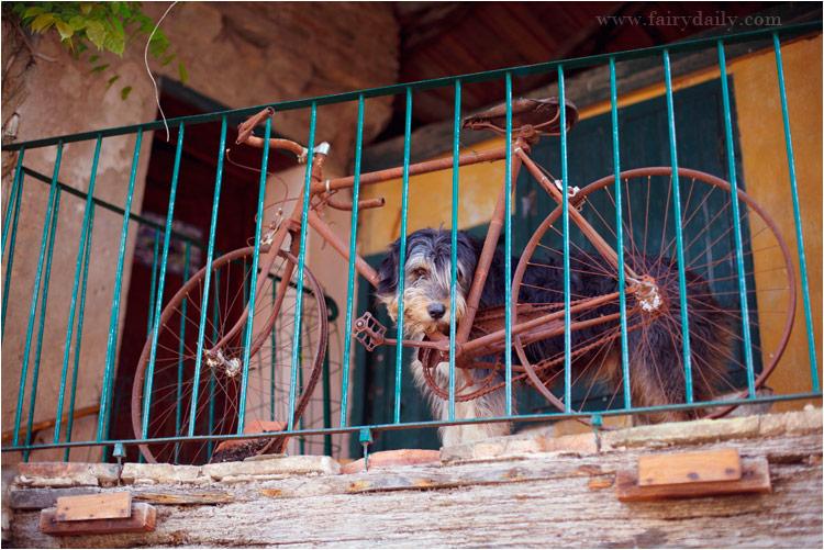 un vieux velo et un chien